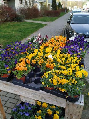 Obrázek Mix květin 1