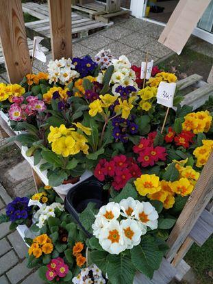 Obrázek Mix květin 2